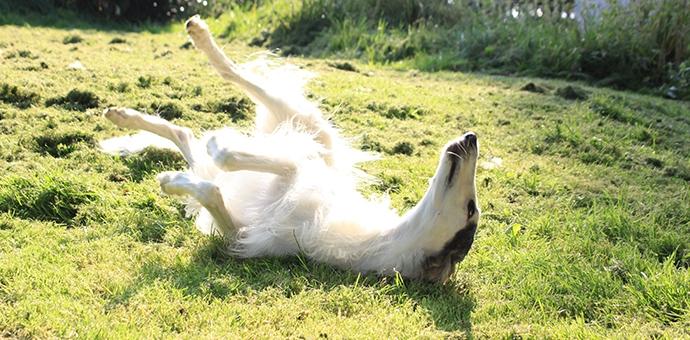 Koennen-Hunde-Sonnenbrand-bekommen